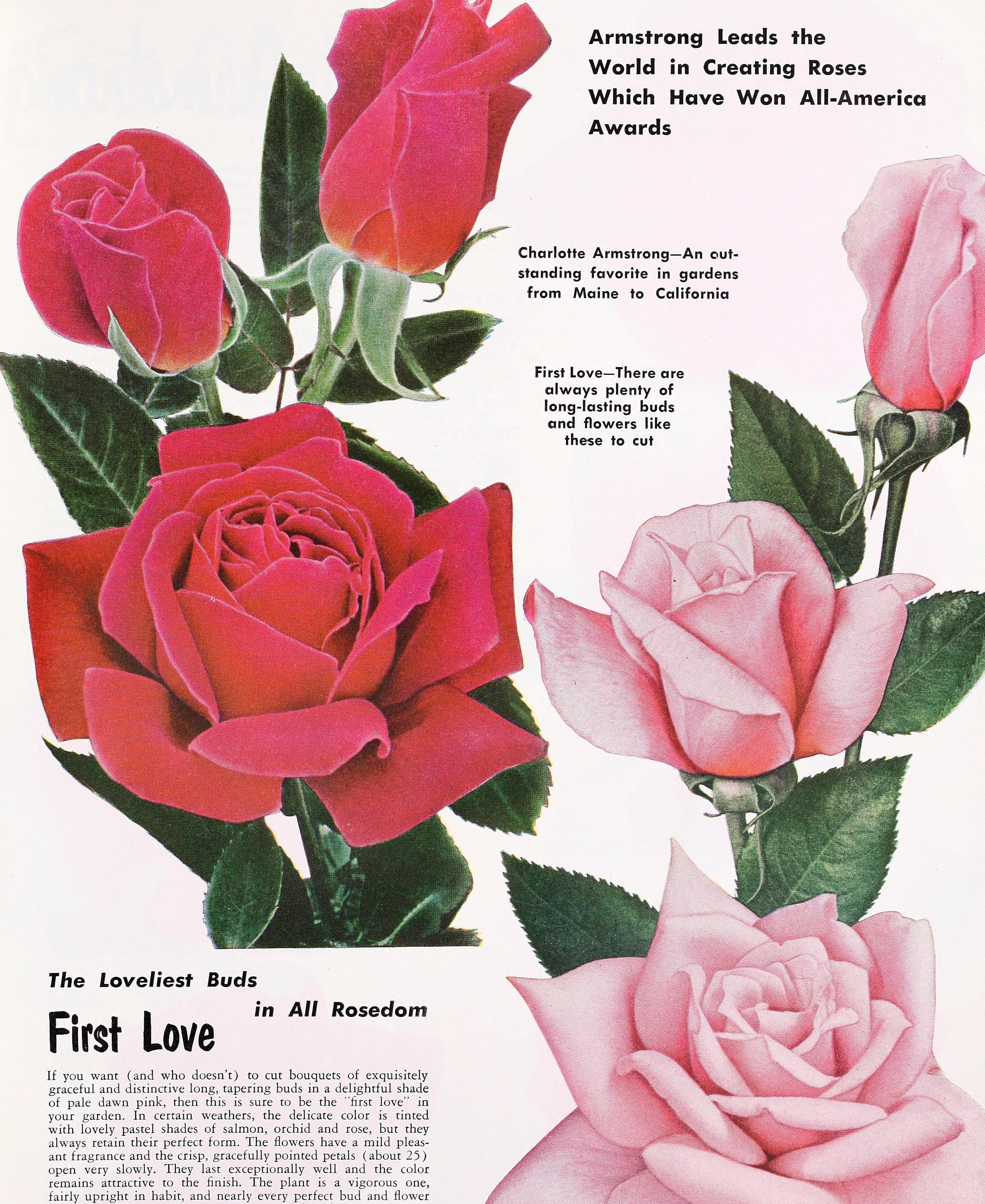 File Armstrong Nurseries 1953 20342038991 Jpg