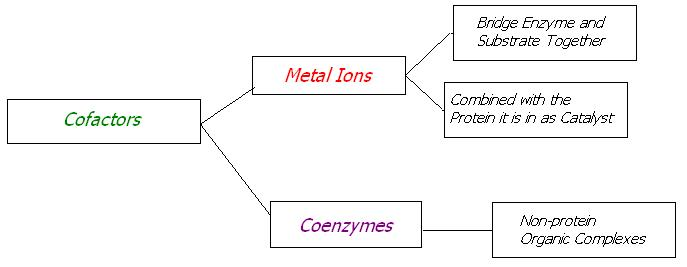 Types Of Flow Charts: Cofactor Flow Chart.JPG - Wikimedia Commons,Chart