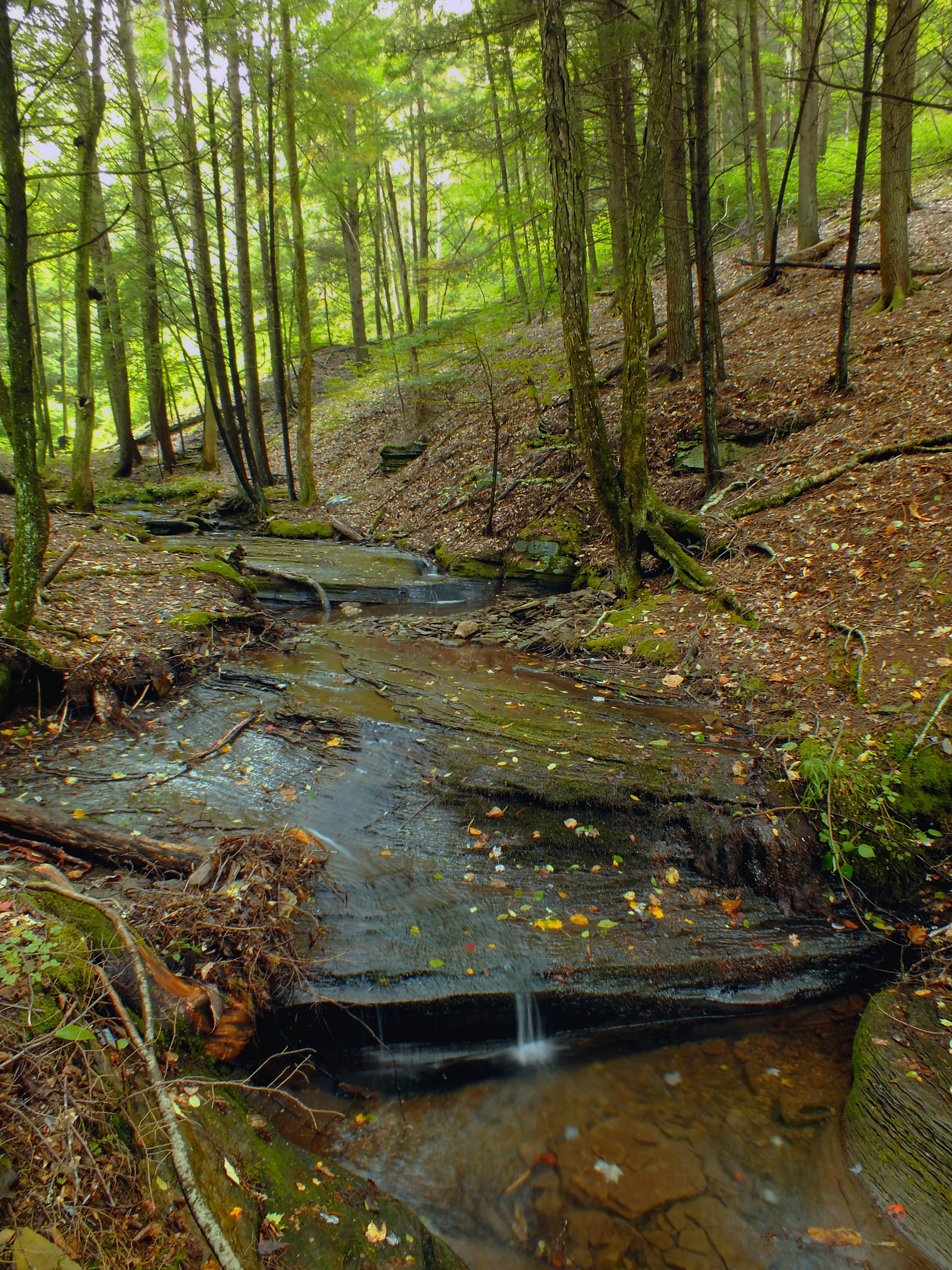 Životné prostredie lesných obojživelníkov a plazov