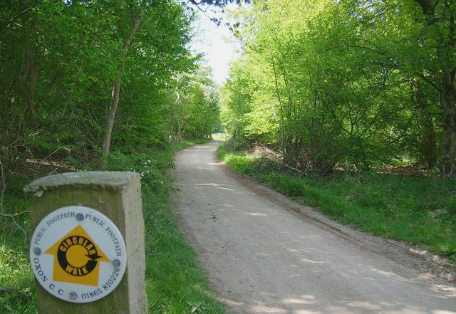 Forest Trail, Wychwood Forest - geograph.org.uk - 1440034