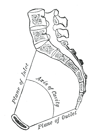 Suspensory Ligament Of Ovary