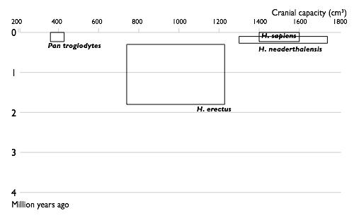 Described Hominin species, 1900