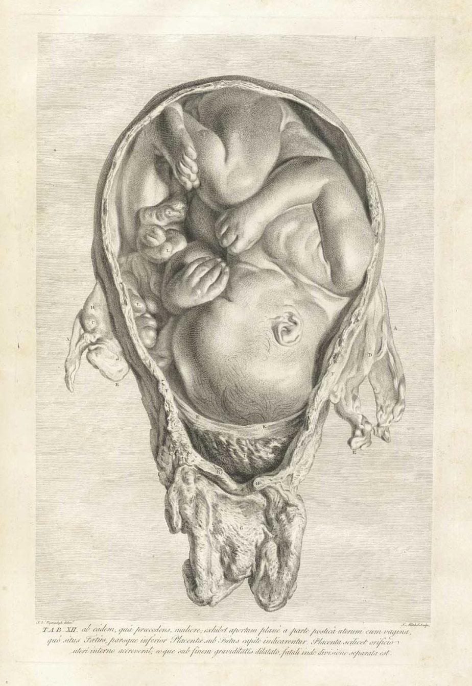 Baby in der Gebärmutter