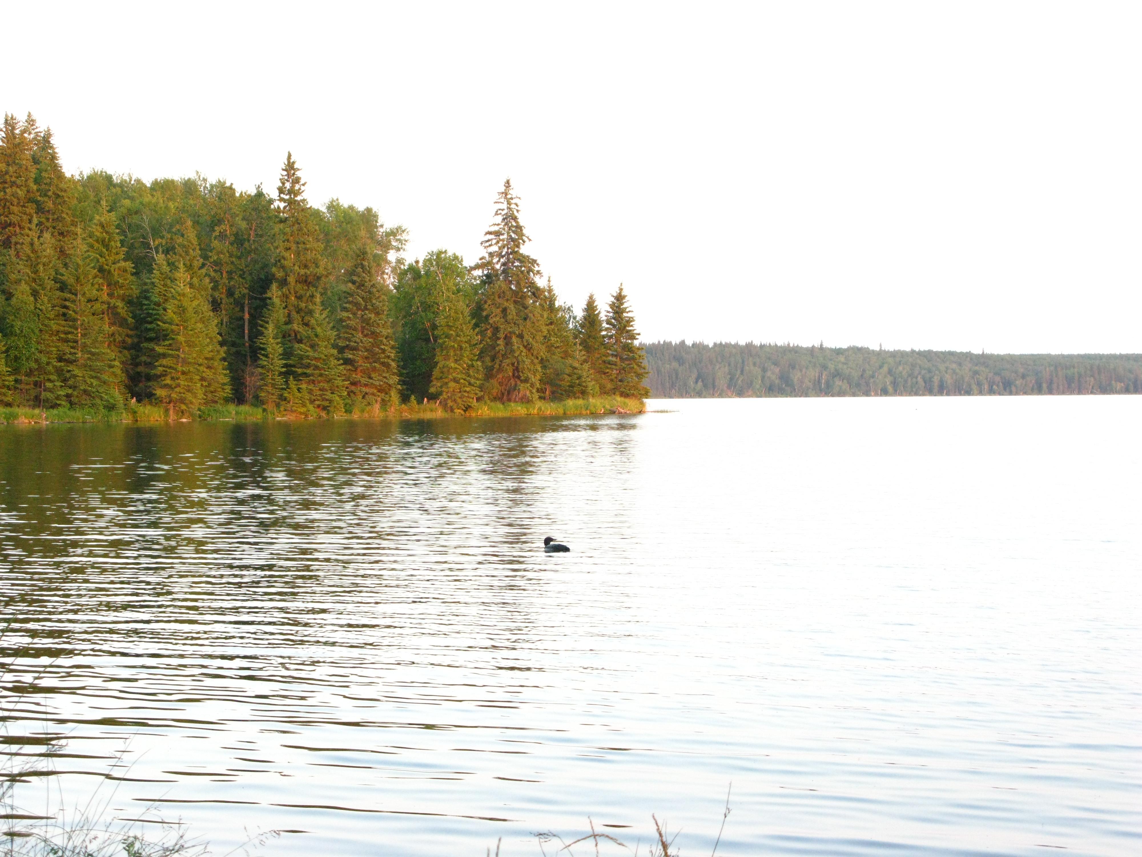 Northern Alberta Lake Properties
