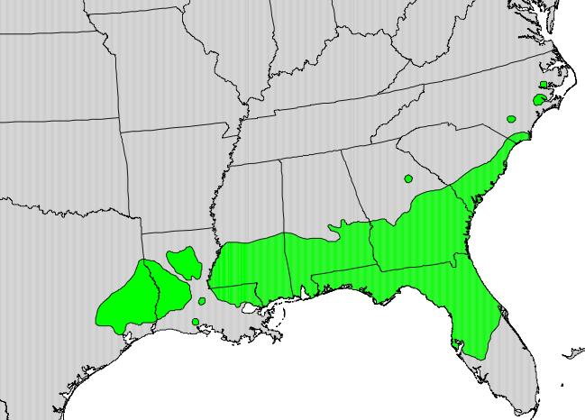 Distribución natural de Magnolia grandiflora.