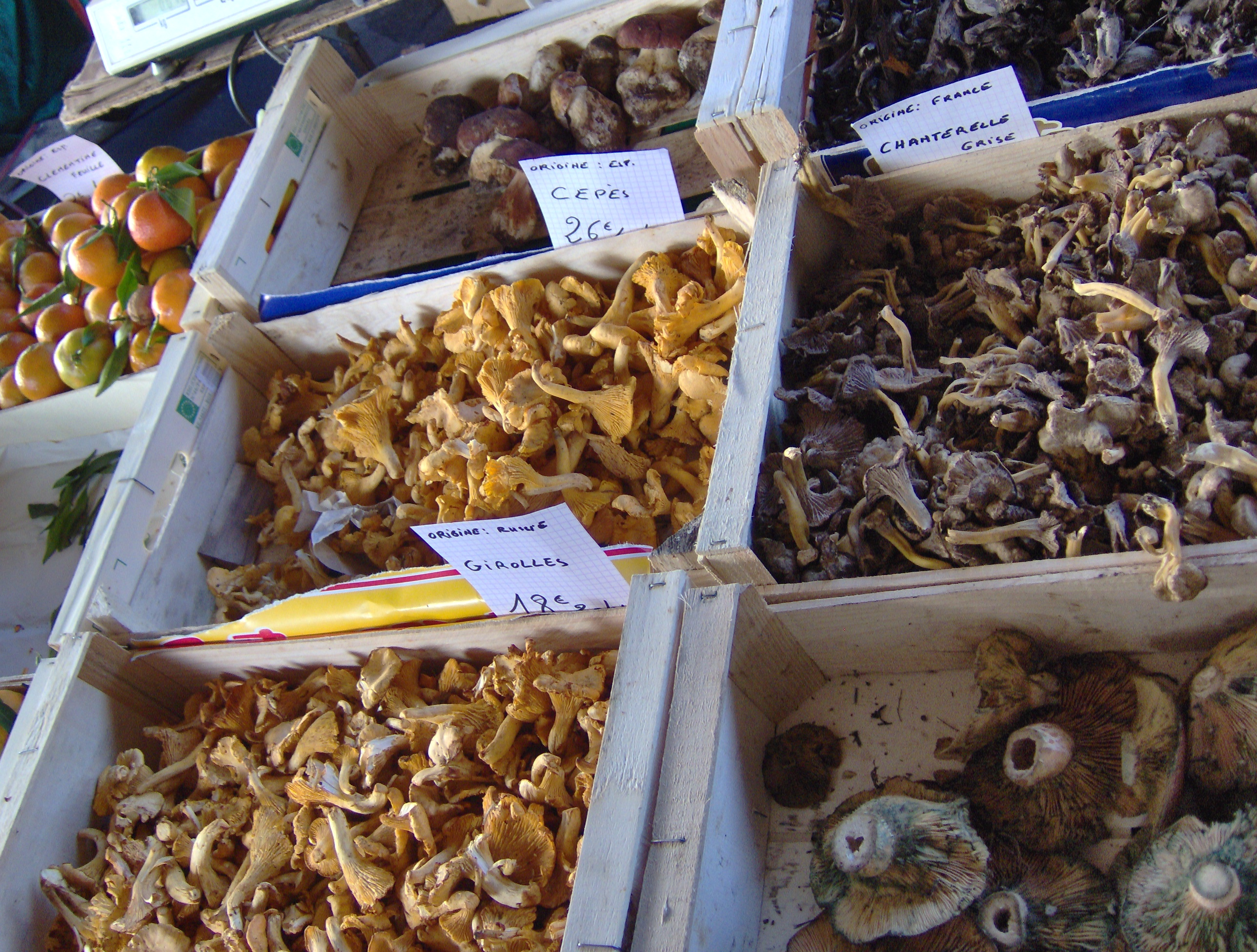 File mushrooms wednesday market salon de provence jpg - Seat salon de provence ...