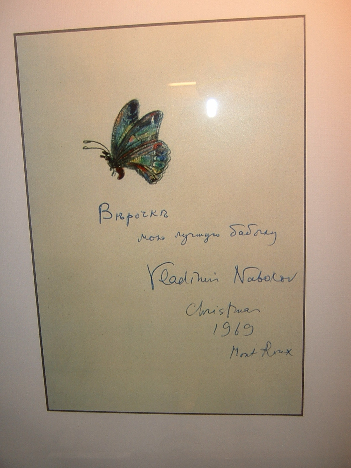 catching butterflies nabokov nabokov s butterflies image retrieved from