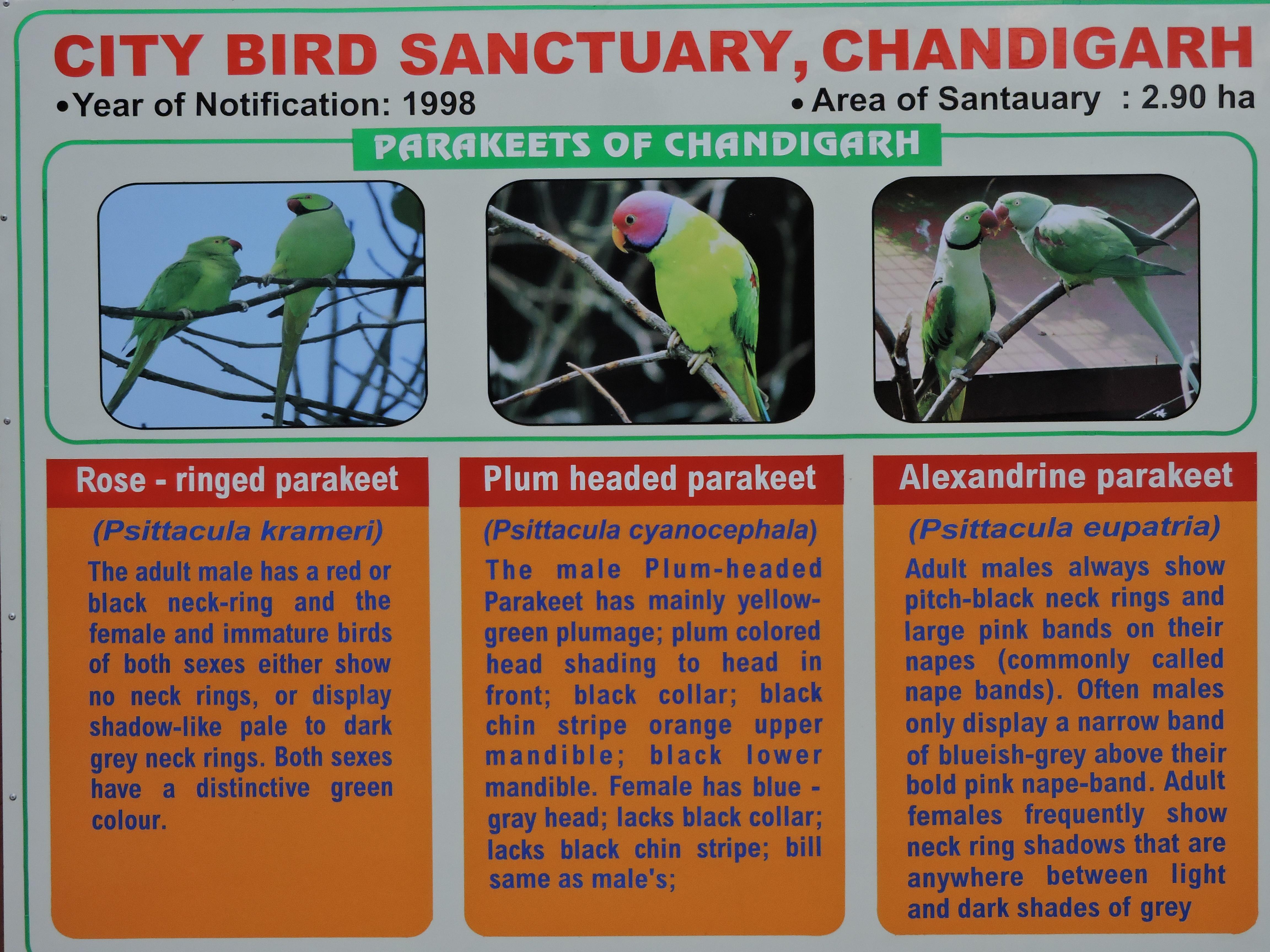 Parrot Bird Sanctuary Chandigarh - Wikipedia