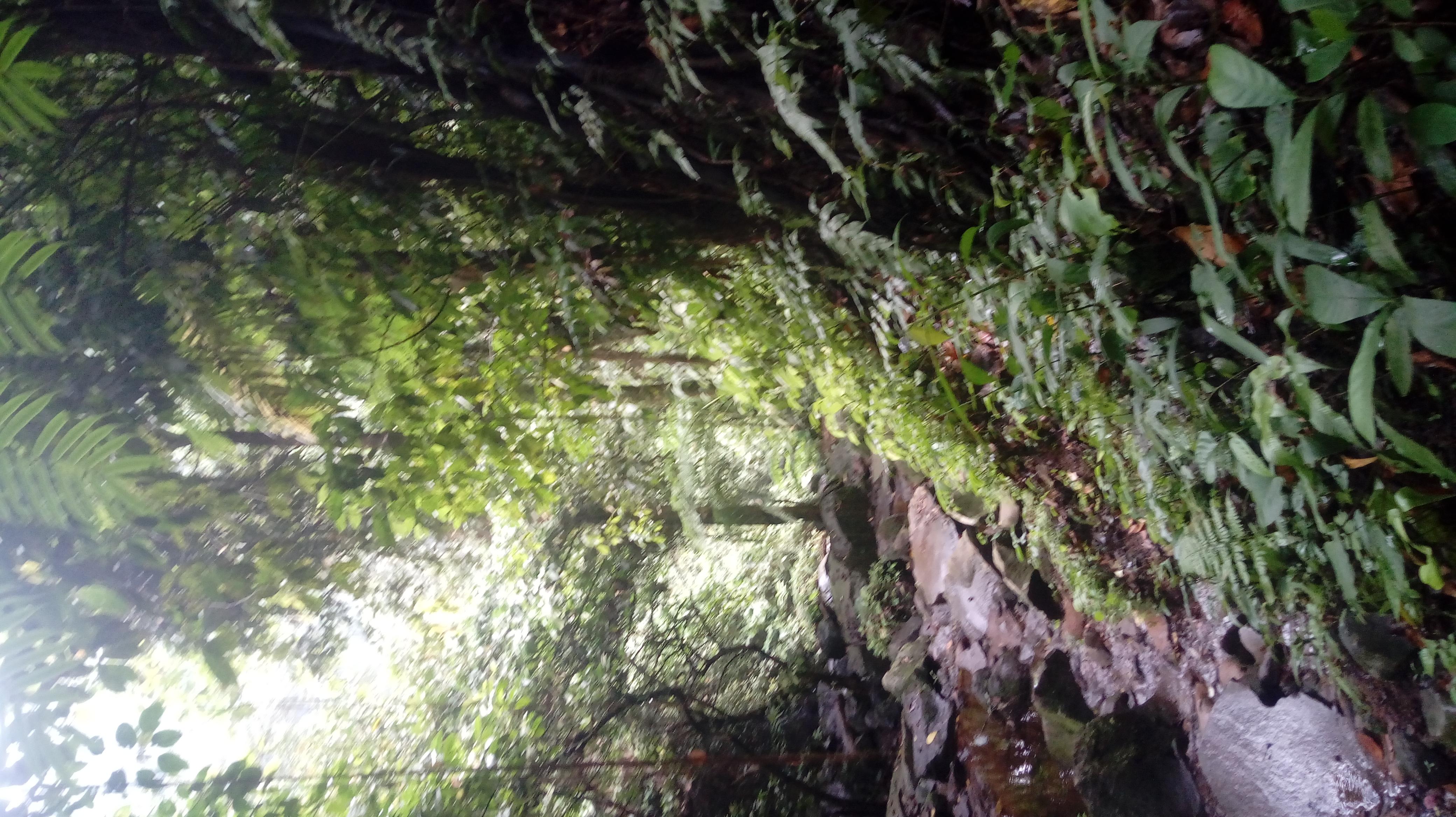 Berkas Pemandangan Alam Sekitar Curug Cikaracak Jpg Wikipedia Bahasa Indonesia Ensiklopedia Bebas
