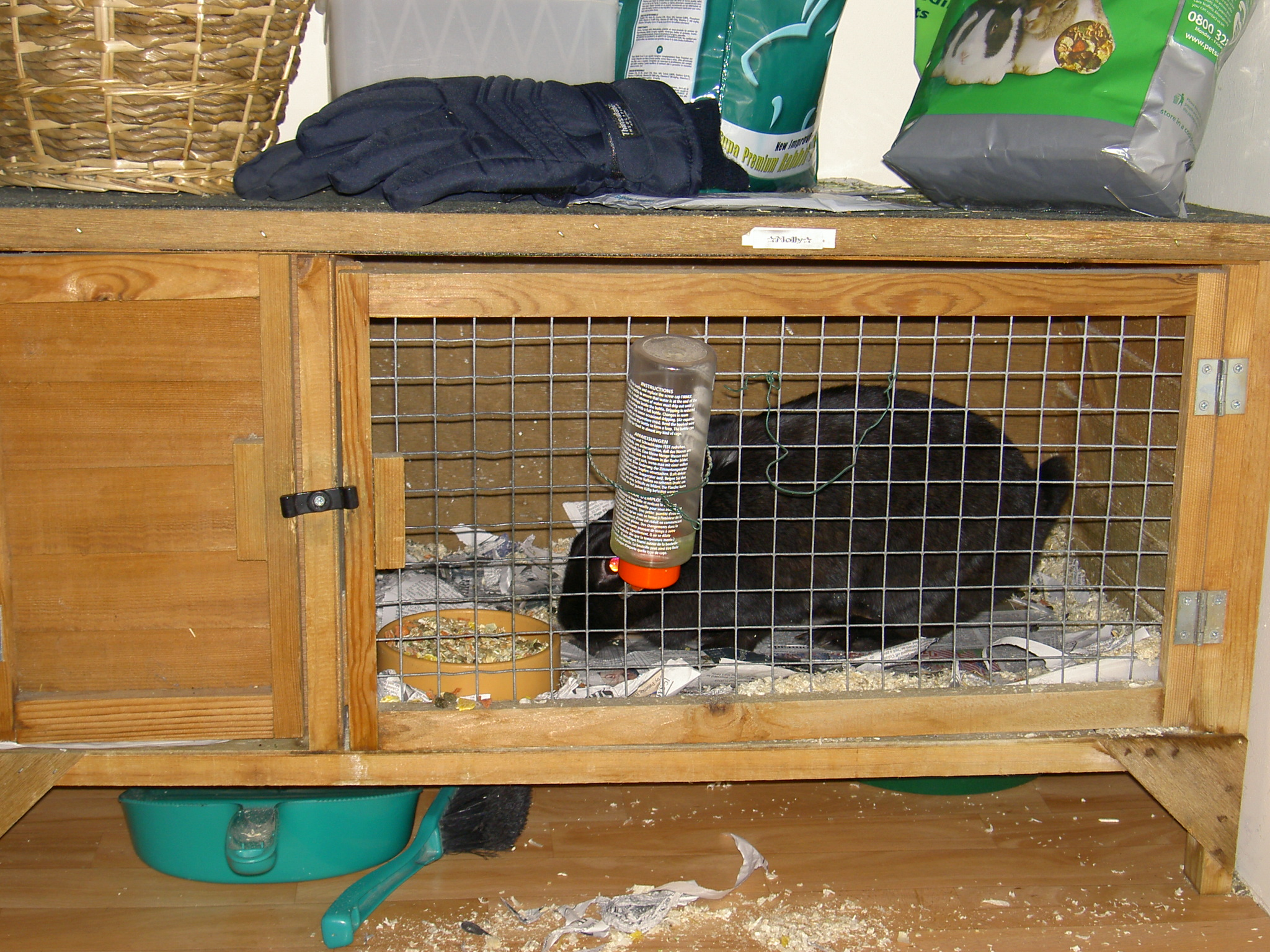 File:Rabbit in hutch.jpg - Wikimedia Commons