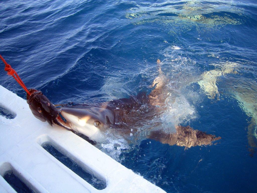 Liste De Films De Requins Tueurs Wikipdia