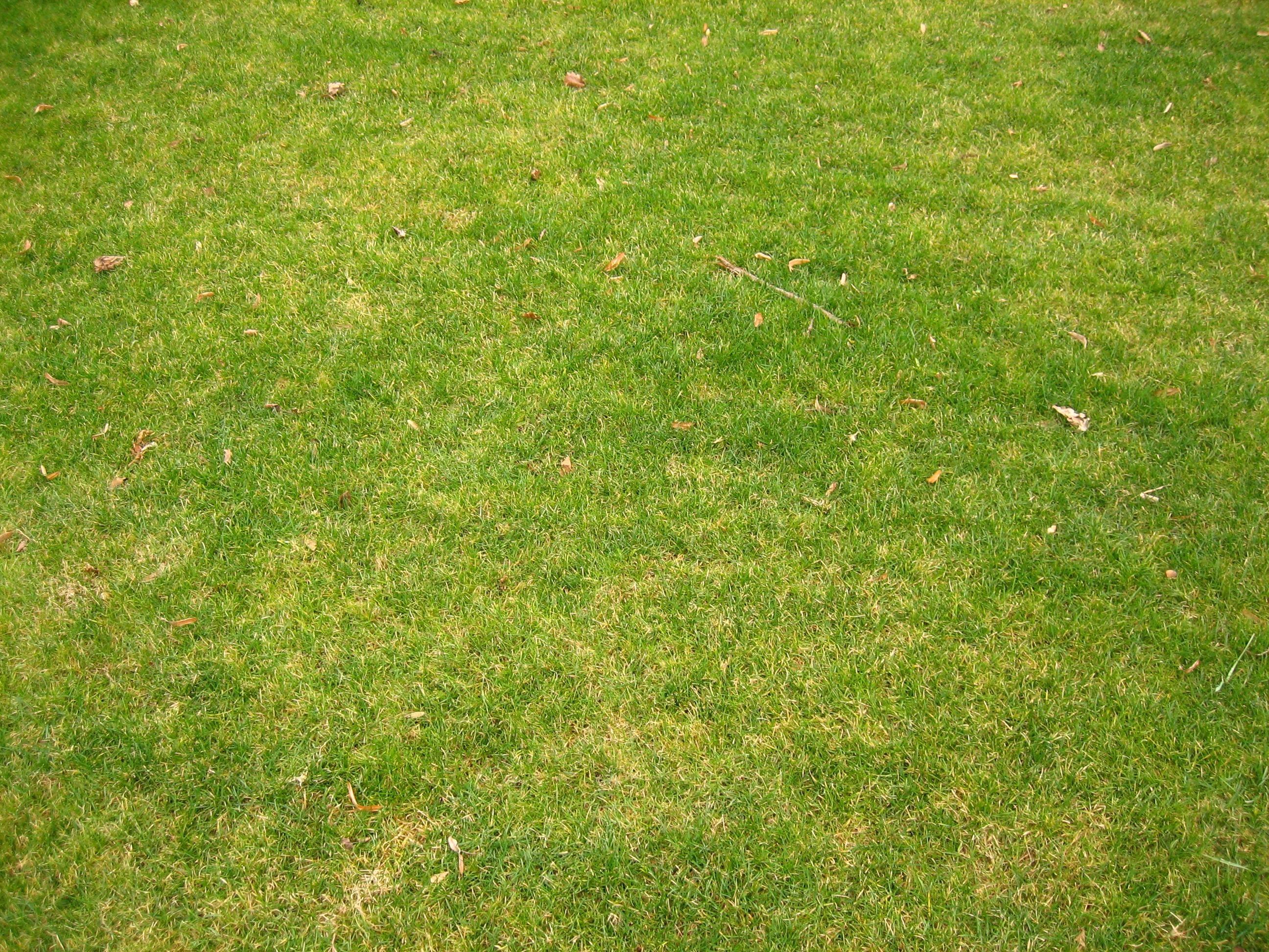 File short for Short grasses for landscaping