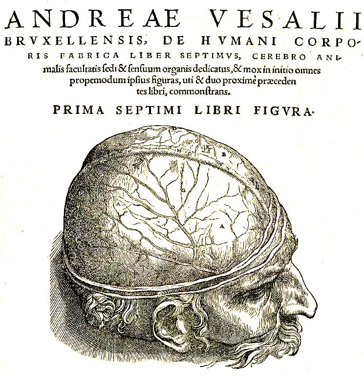 Hirnhaut – Wikipedia