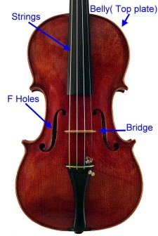 Violin front view.jpg