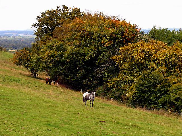 Wayfarer's Walk - geograph.org.uk - 62417