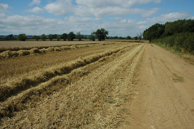 Wheat field, Frogmore Farm - geograph.org.uk - 1450101