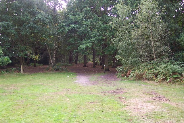 Whitmoor Common - geograph.org.uk - 57233