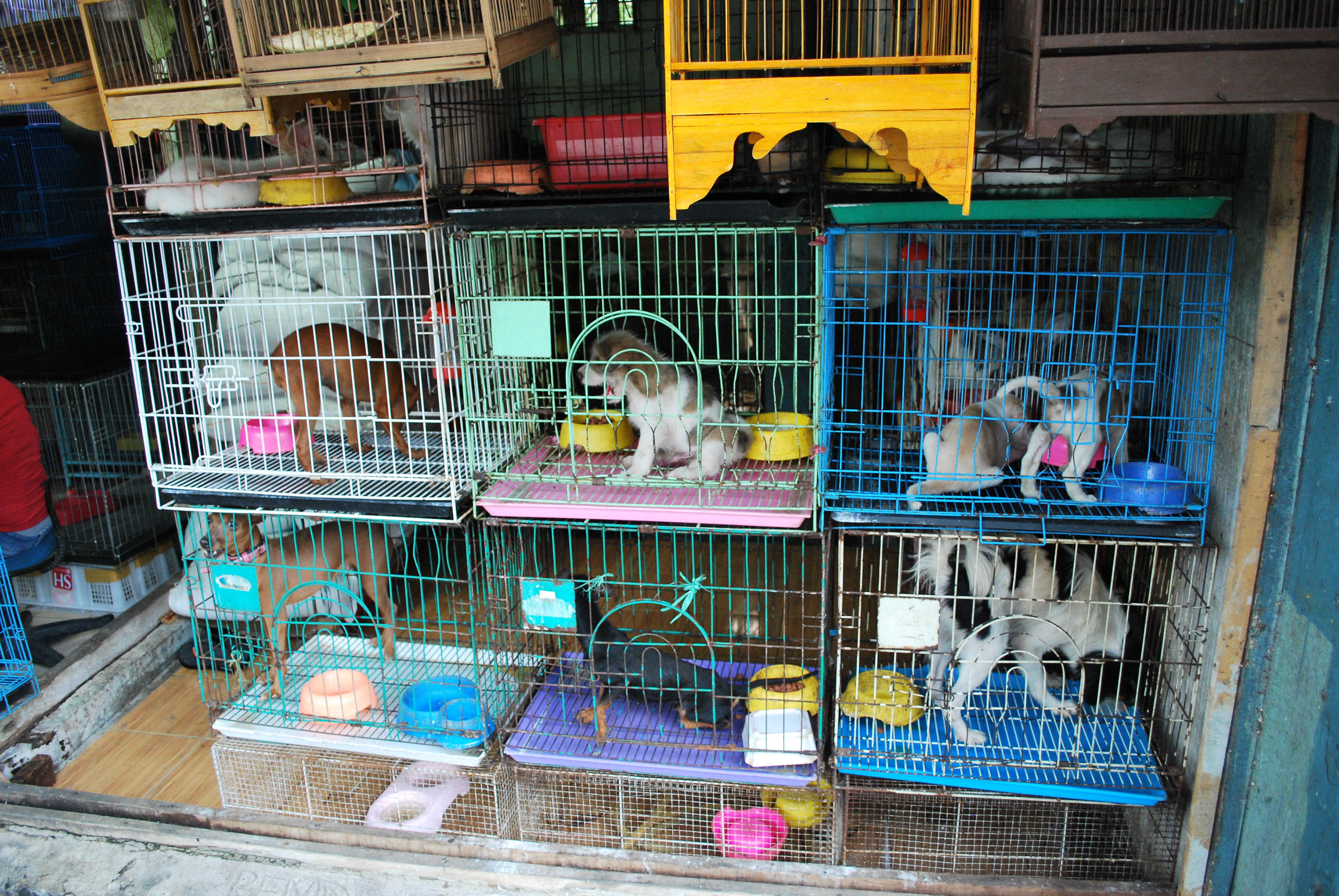 online pet stores 4 scams to watch out for dog cat