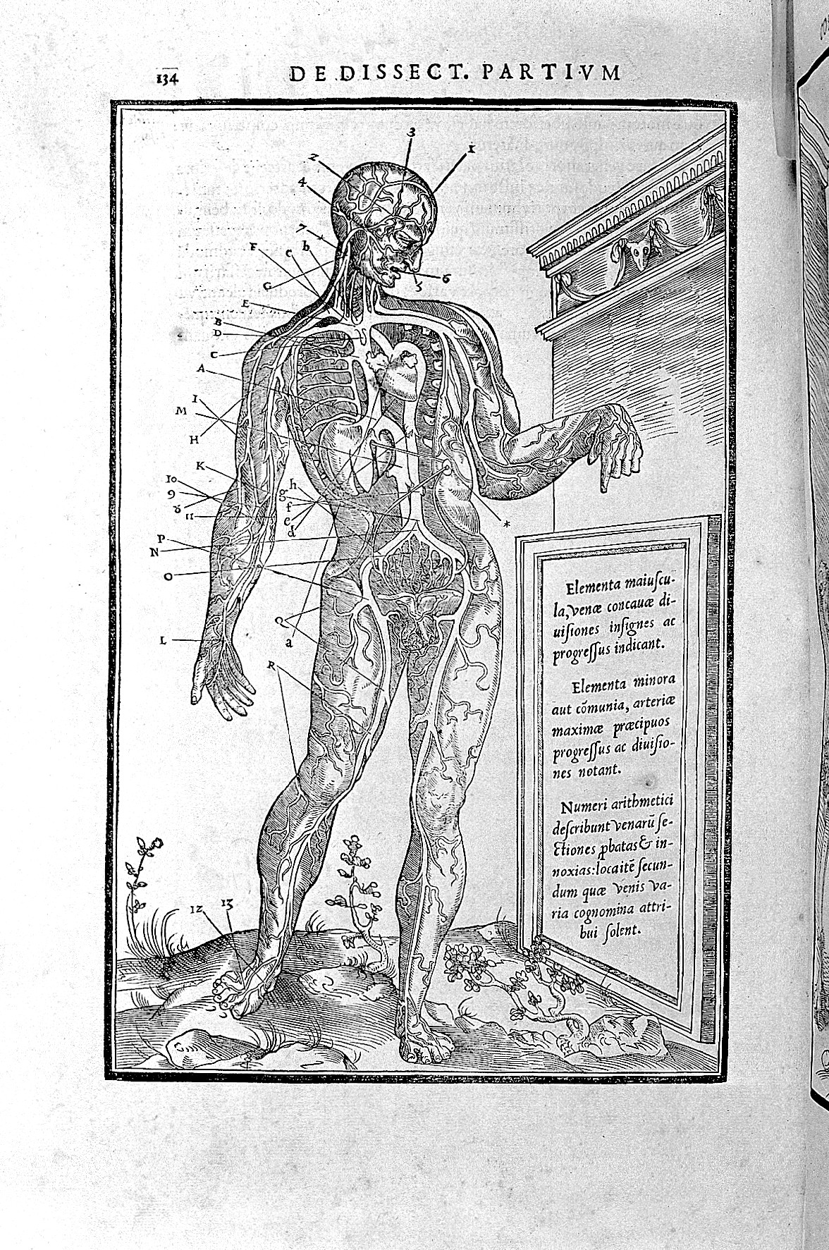 File:Woodcut of male with blood vessels and internal organs ...