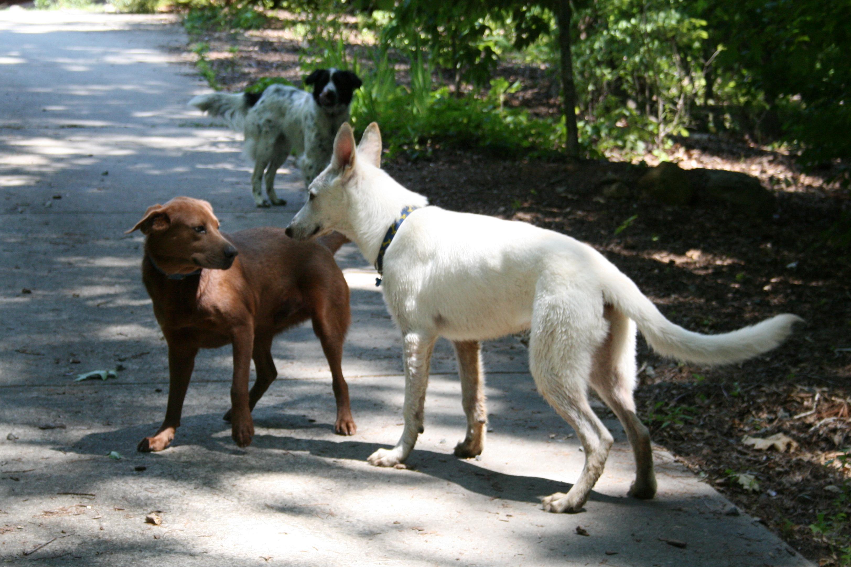 File 2008 06 18 Dogs Meeting Jpg Wikimedia Commons