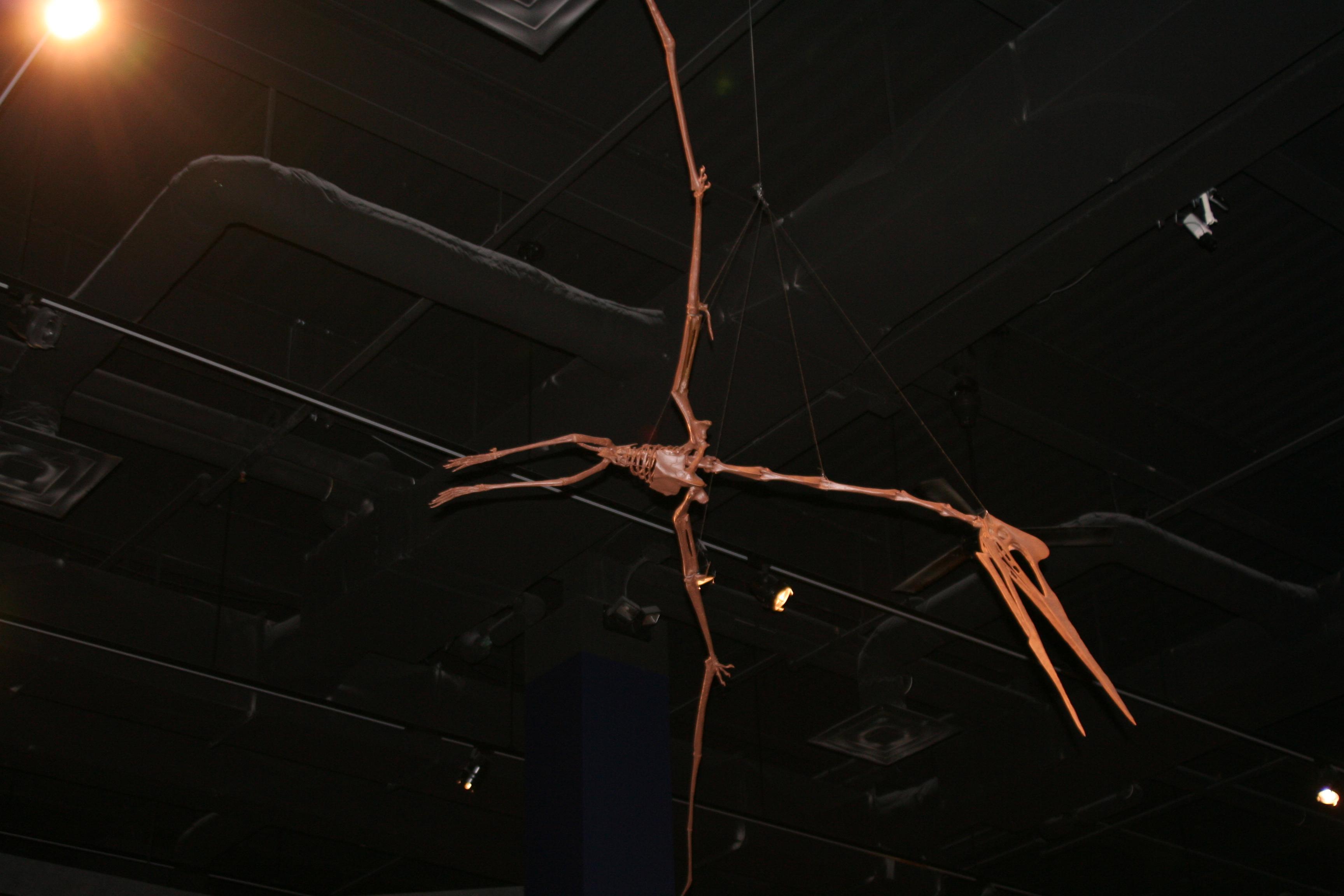 Burpee Museum Of Natural History Jane