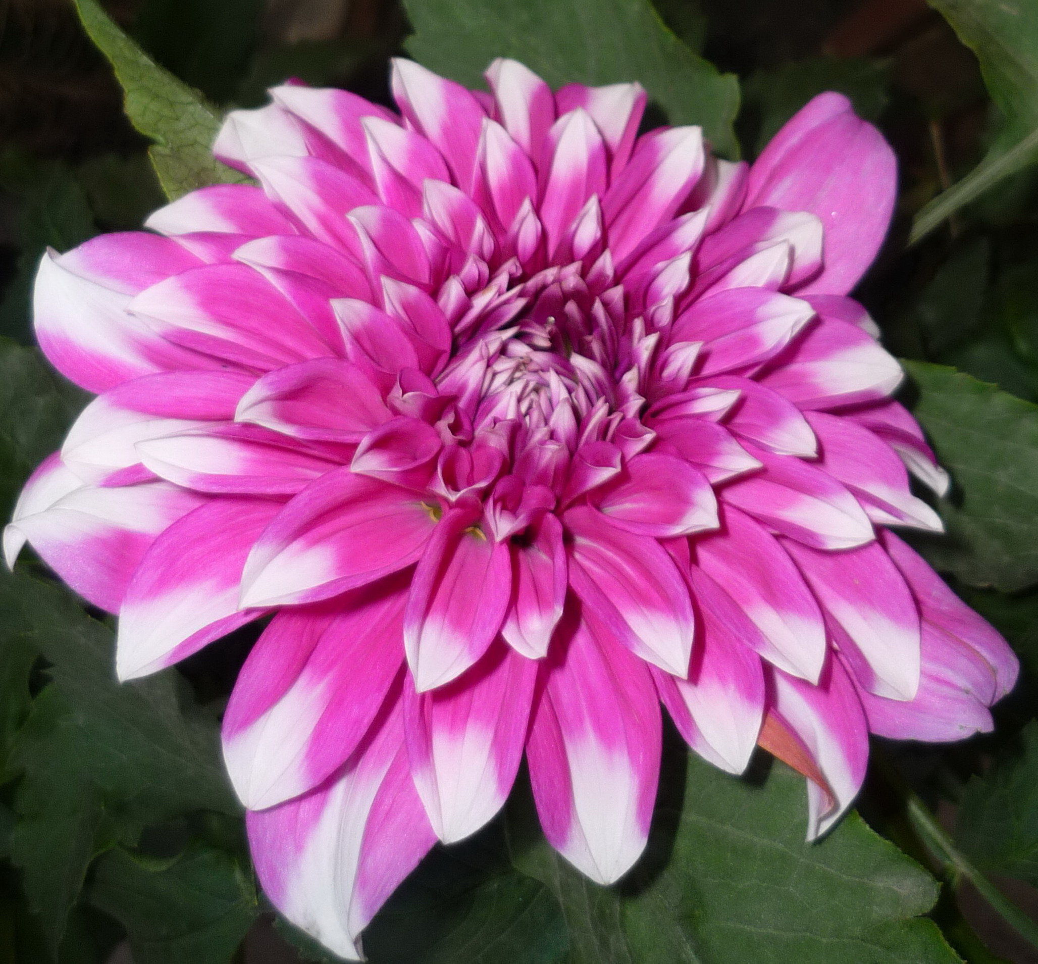 Image Result For Flowers Color In