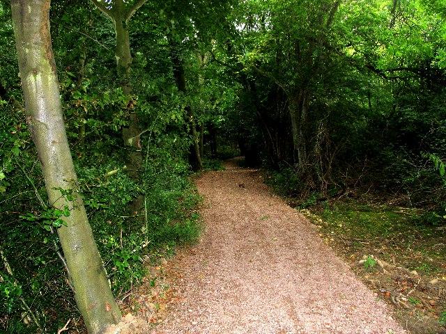 Cotswold Way, Dowdeswell Woods - geograph.org.uk - 43882