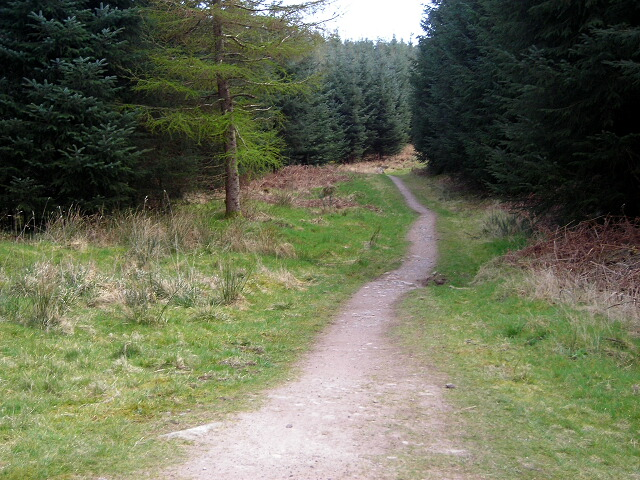 Cycle Trail in Dalbeattie Forest - geograph.org.uk - 392767
