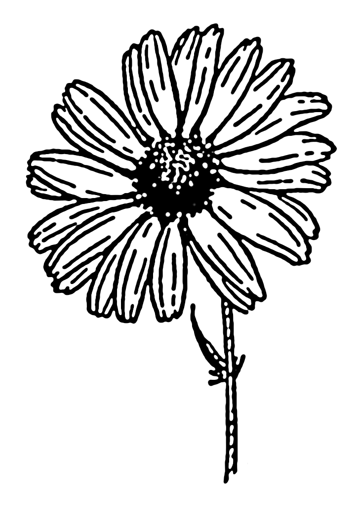 Image Result For Free Printable Daisy