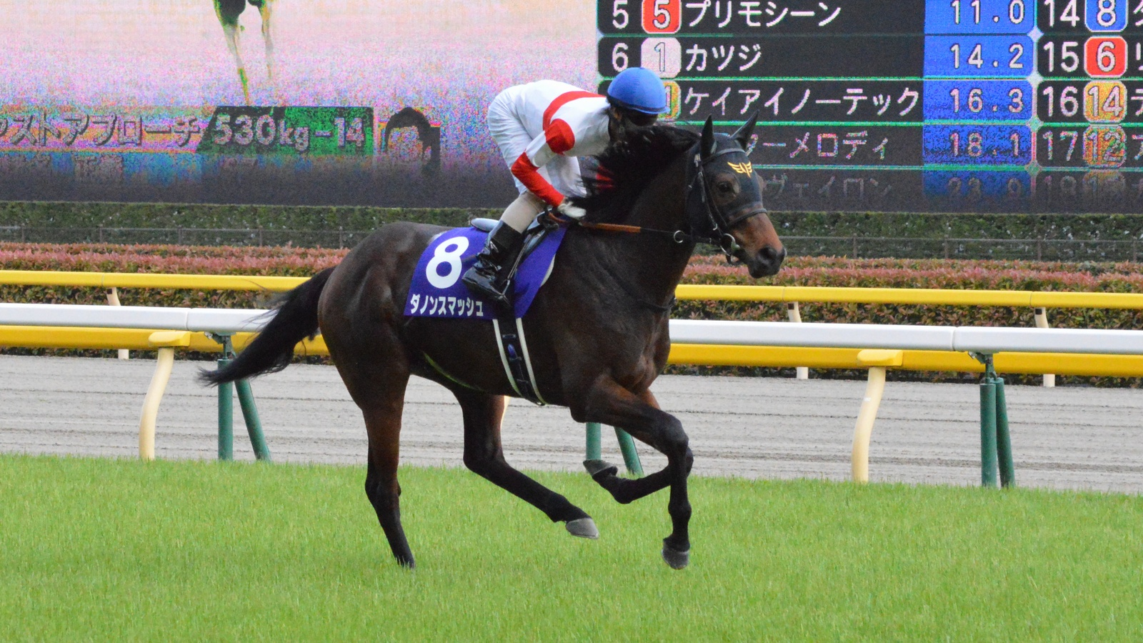 Takamatsunomiya Kinen Betting Odds