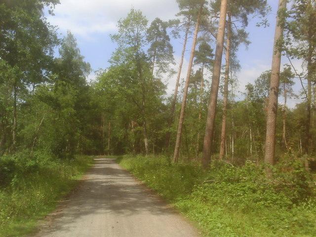 File:Eystrup- Akazienweg - geo.hlipp.de - 11244.jpg
