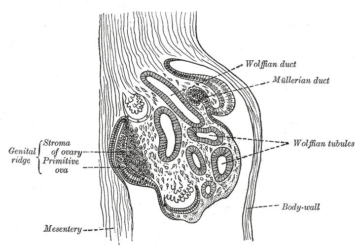 Vaginal Analverkehr wechseln sich ab