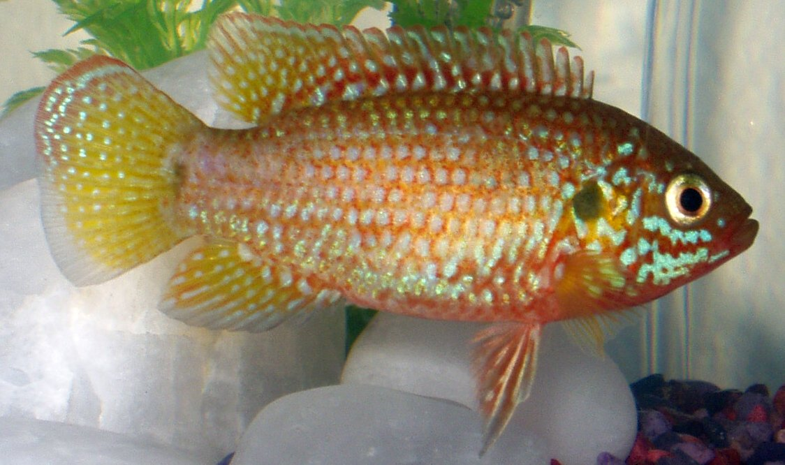 List of fishes of Florida - Wikipedia
