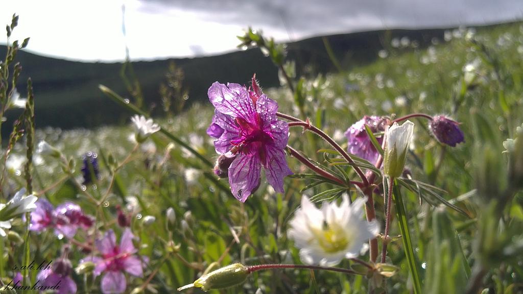 منظره ای زیبا از گلهای خان کندی