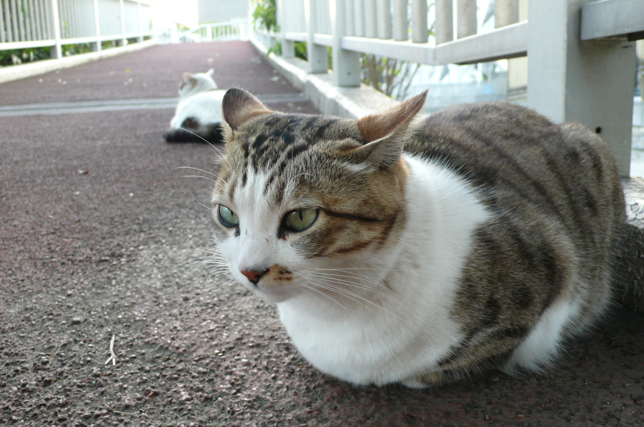 Does Good Cat Food Make Their Fur Soft