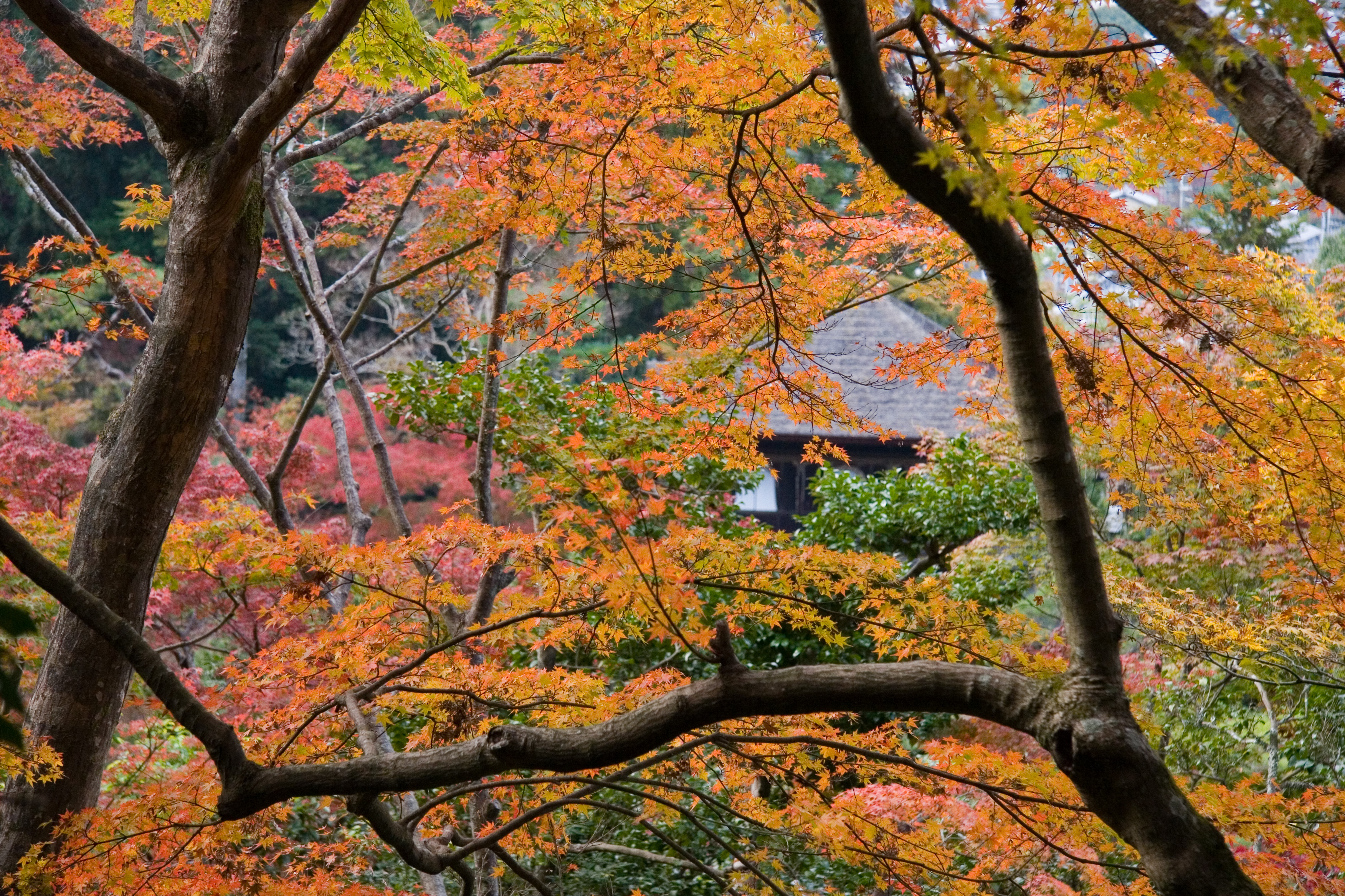 Kyoto-Tempel