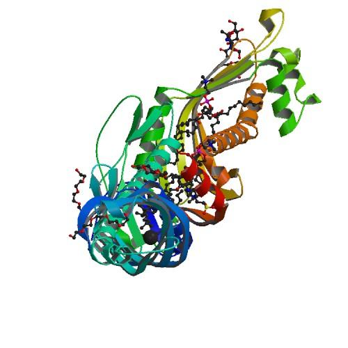 Kolesteril Ester Transfer Proteini