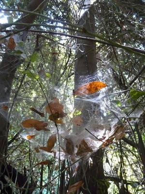נחיתת העלים ברשת טבעית
