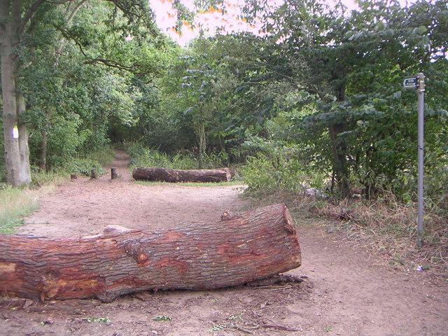 Public Bridleway - geograph.org.uk - 217551