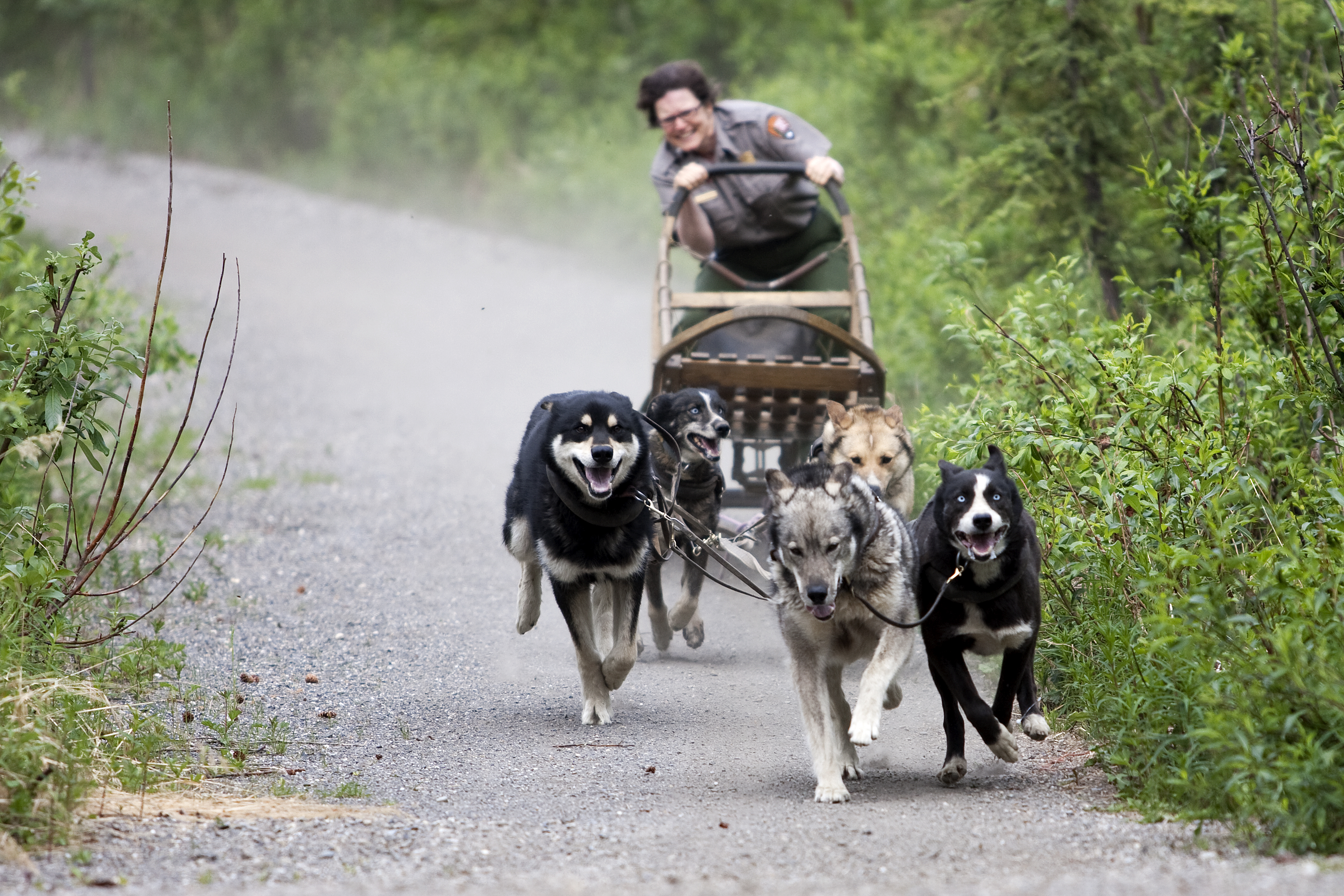Training Carts For Sled Dogs