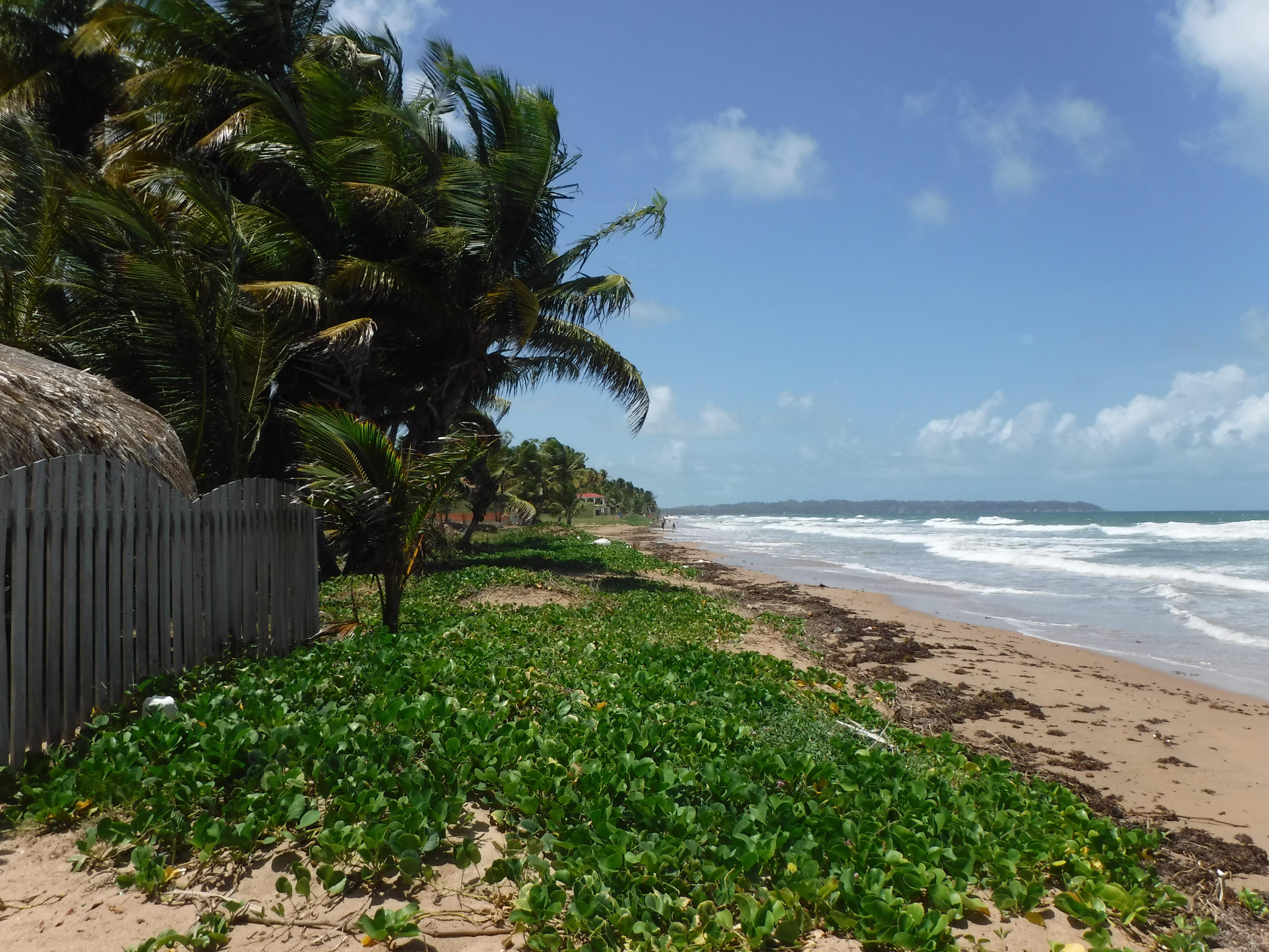 File vegetation lining the shore of mayaro beach trinidad and tobago jpg wikimedia commons
