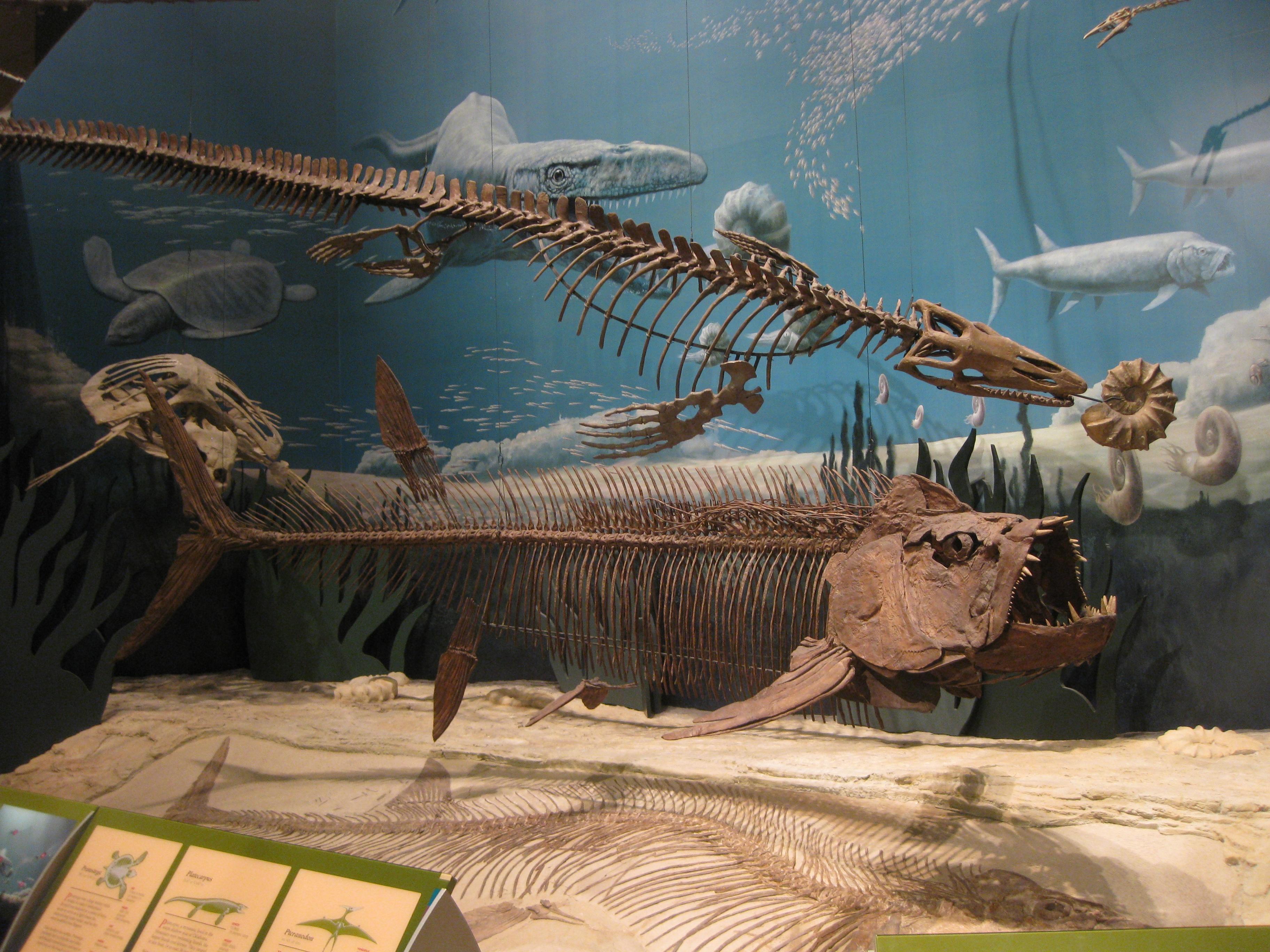 Sam Noble Oklahoma Museum Of Natural History Pr Ximos Eventos