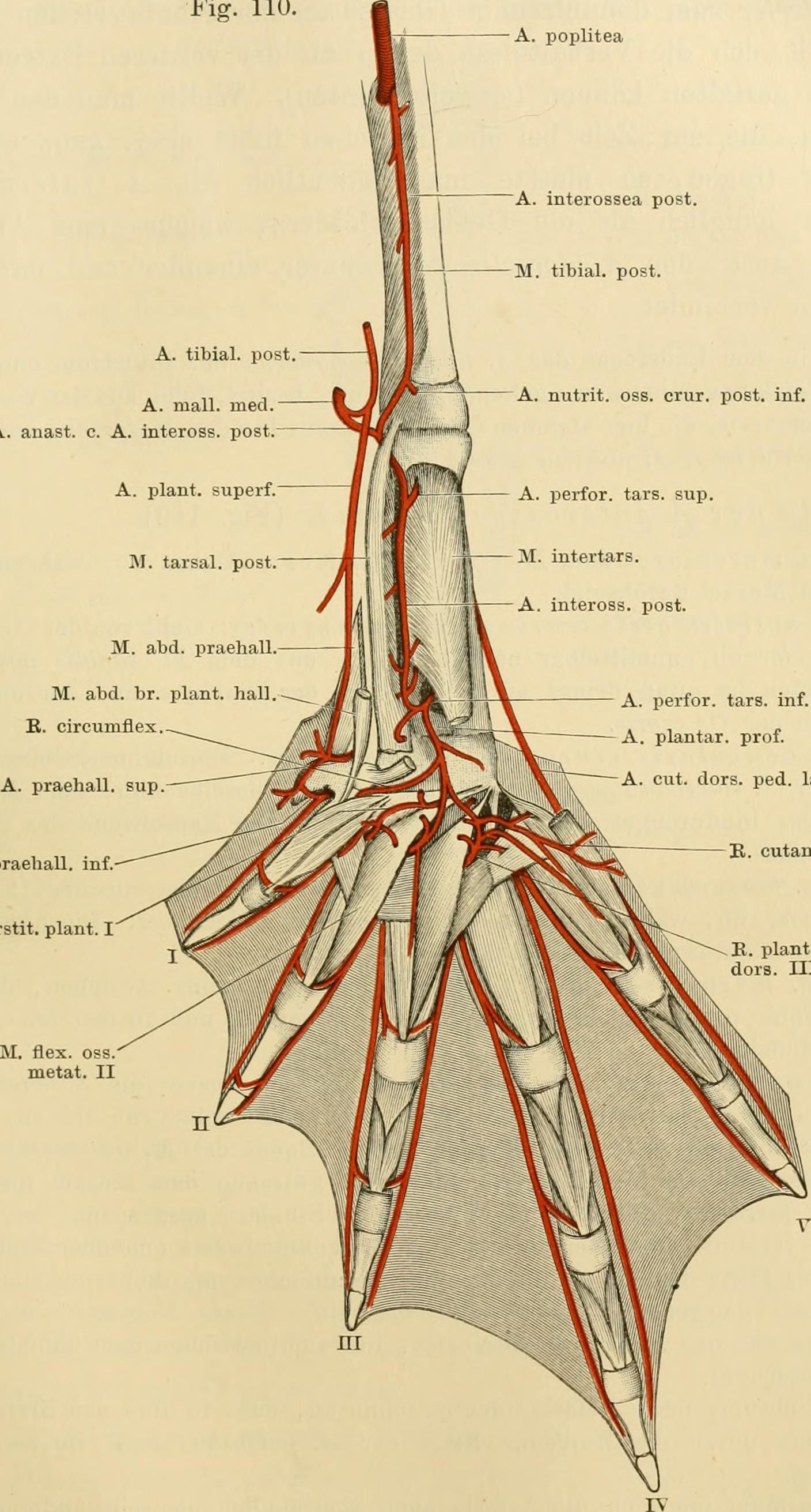 Atemberaubend Antworten Auf Laborhandbuch Für Anatomie Und ...