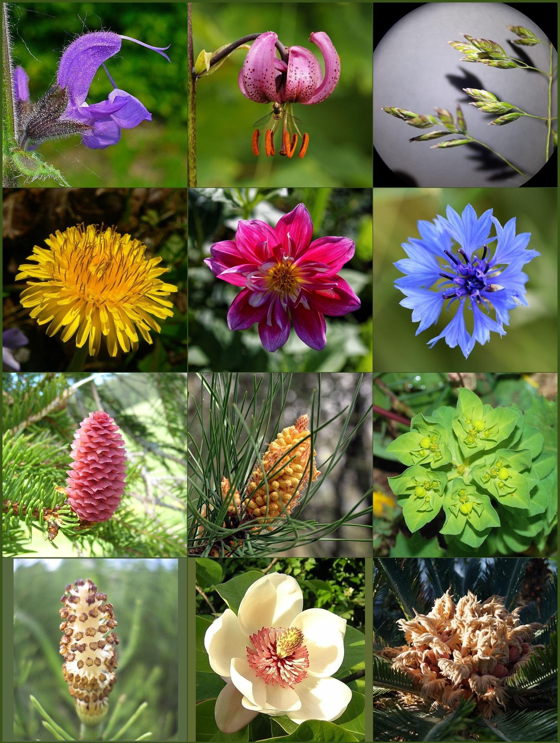 1 Gibt Es Noch Andere Pflanzen Als Samenpflanzen