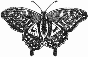 Image Result Forerfly Coloring Book