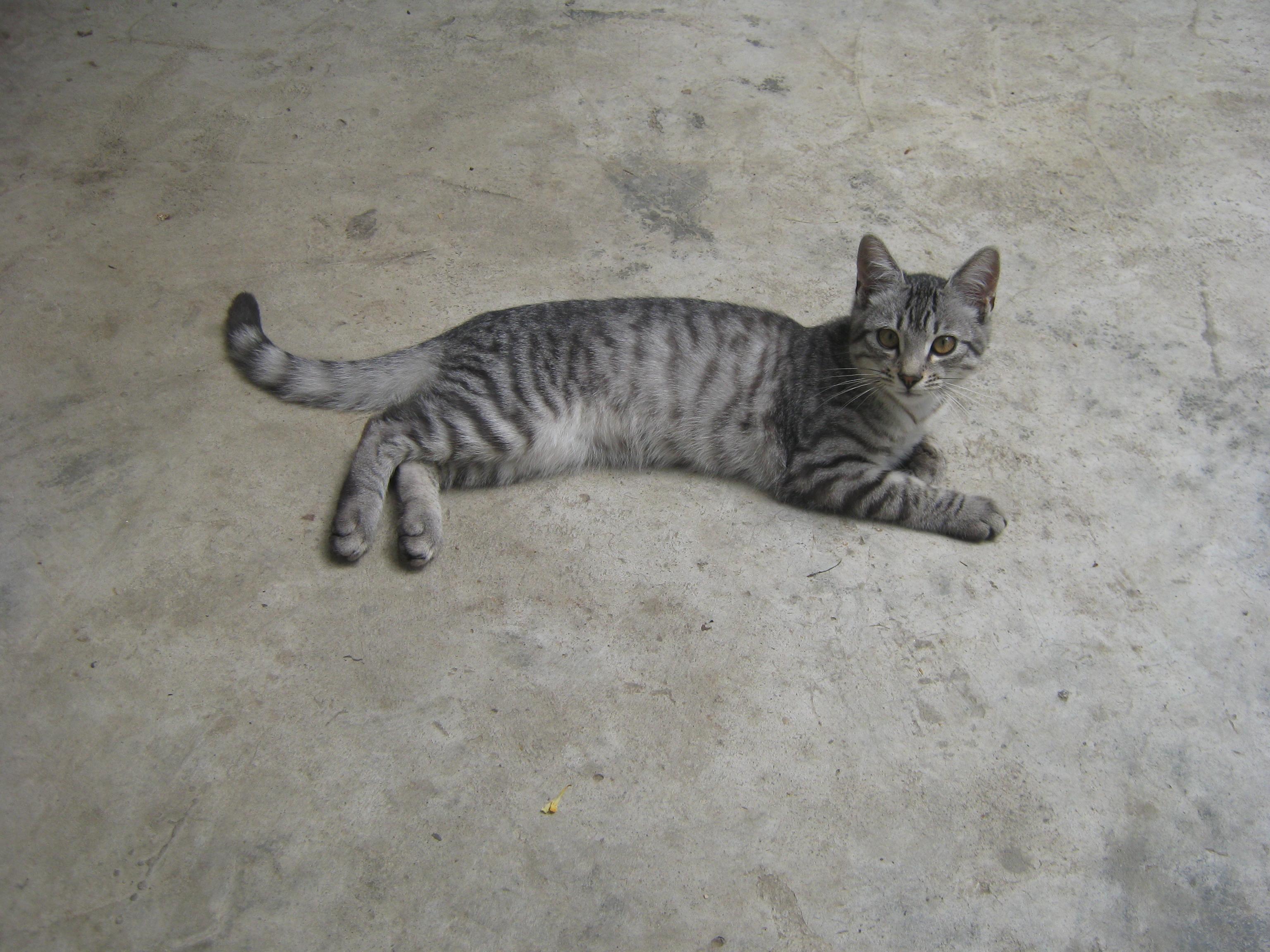 File Cat On Concrete Floor Jpg
