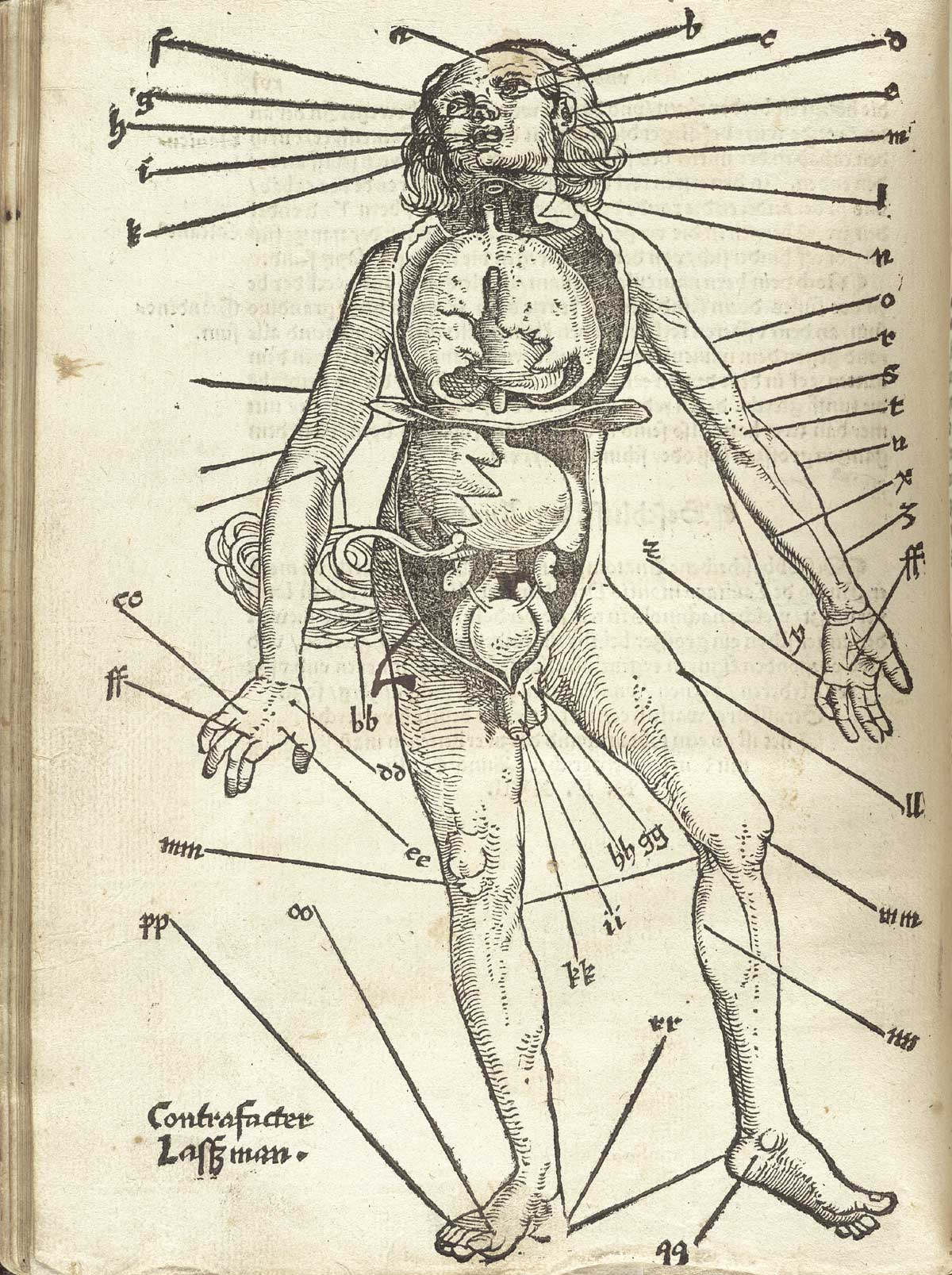 Antique Human Diagram for Bloodletting