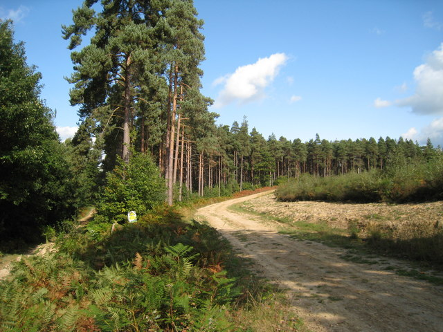 Hemsted Forest - geograph.org.uk - 989970