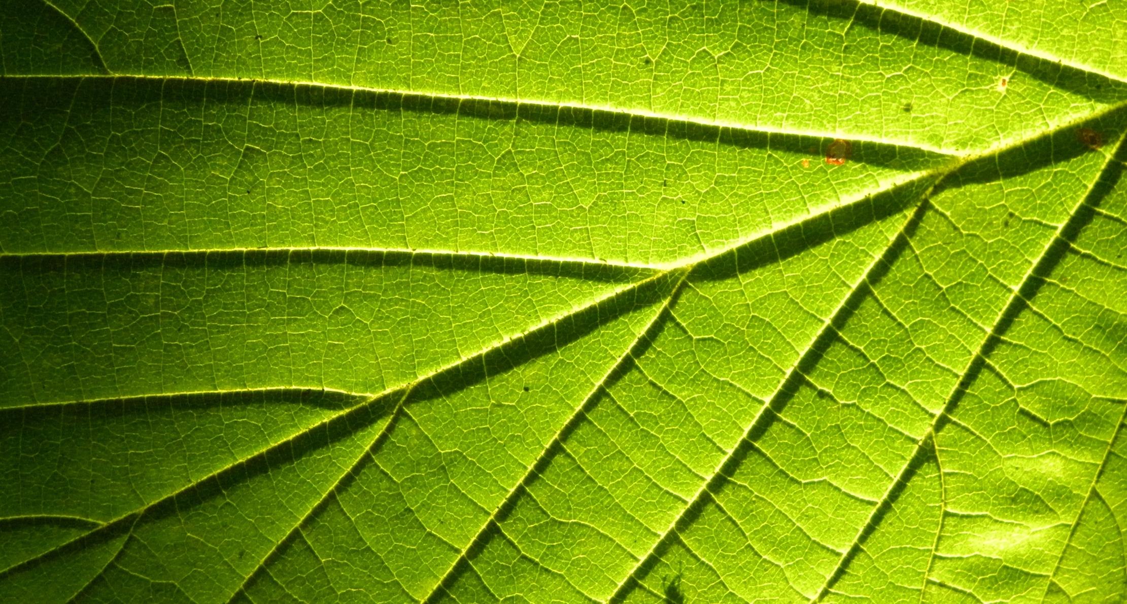 file leaf sun wikimedia commons. Black Bedroom Furniture Sets. Home Design Ideas