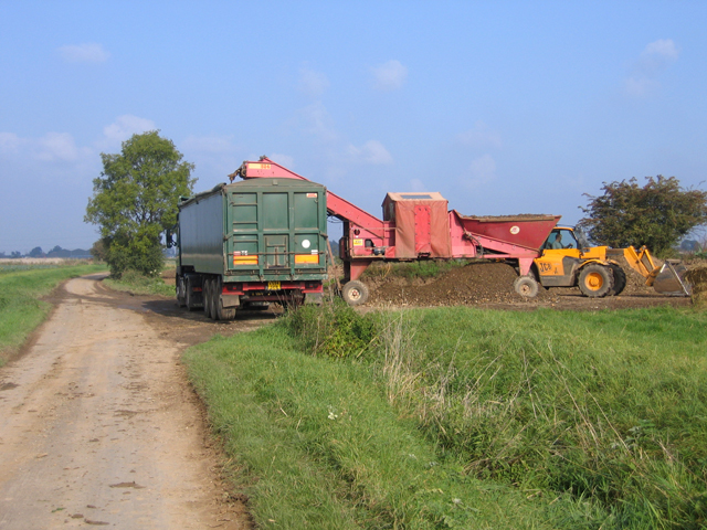 File:Loading the sugar beet harvest, Gosberton, Lincs - geograph.org.uk - 260151.jpg